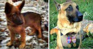 Rusi su poklonili Francuskoj štene petface