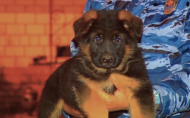 Rusi su poklonili Francuskoj štene petface2