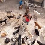 POTROŠIO BOGATSTVO: Sagradio sklonište i spasio preko 2.000 pasa! (VIDEO)