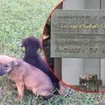 NOVI SAD: Studenti Medicinskog fakulteta brinu o 5 napuštenih štenaca!