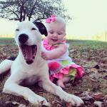 6 MILIONA PREGLEDA: Deset nedelja stara beba I štene pitbula NAJBOLJI PRIJATELJI!