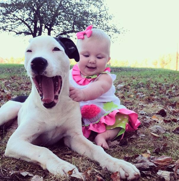 beba I štene pitbula petface