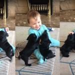 SMEJAĆETE SE SA NJIM: Dečak upoznaje dva nemirna šteneta i ne prestaje da se smeje! (VIDEO)