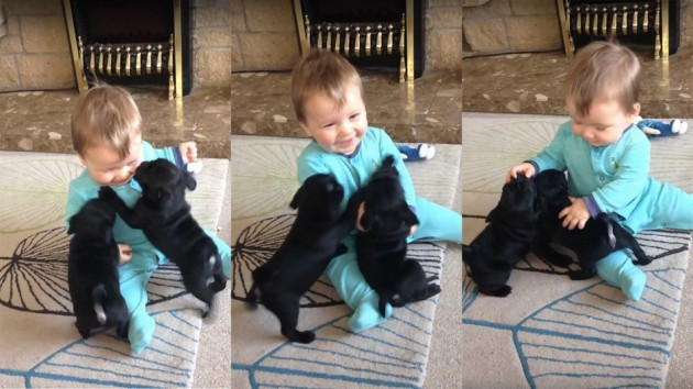 dva nemirna šteneta petface