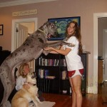 gigantskih pasa petface