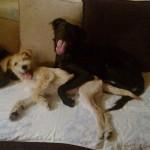 KAKAV DAN: Zahvaljujući svima NAMA i Geri i Maša – izgubljeni psi – pronađeni u istom danu!