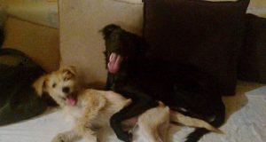 izgubljeni psi petface