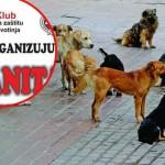 """UŽICE: Humanitarni koncert za napuštene pse uz apel: """"Hoćemo azil za životinje""""!"""