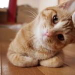 """8 zakova da vas vaša mačka voli – na malo """"neobičan"""" način!"""