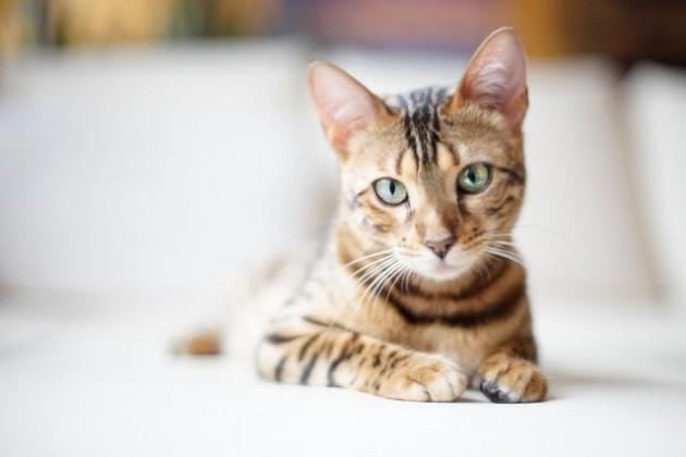 mačke imaju devet života petface