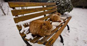 macama tokom zime petface