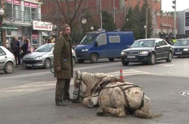 mučki tukao konja petface