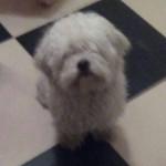 Ovo je Munja, pas kome MORAMO naći dom, inače će ga izbaciti na ulicu!