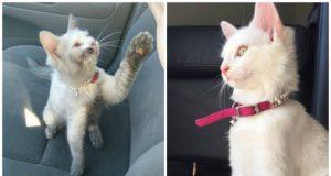 napuštena mačka petface