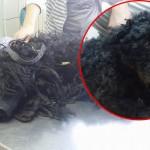 SUBOTICA: Bobi pas u tranformaciji dana – od pakla do raja! (FOTO)