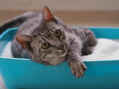 pesak za mačke petface