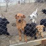 SUBOTICA: Violeta kupila poseban plac kako bi pomogla napuštenim psima!