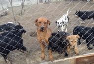 pomogla napuštenim psima petface