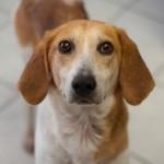 """Napušteni pas u epizodi: """"Pomozite nam, jer na jednom mestu u Srbiji to možete učiniti besplatno""""!"""