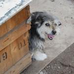U Pančevu postavljene prve kućice za napuštene pse i mačke!