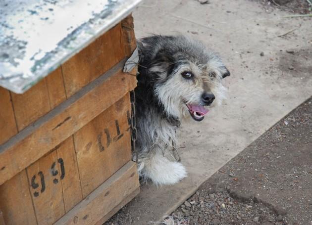 kućice za napuštene pse i mačke petface