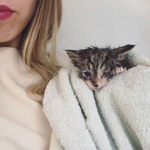 Upoznajte Hanu (28) kojoj je zanimanje spasavanje mačića!