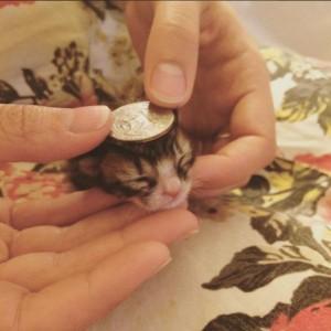 spasavanje mačića petface9