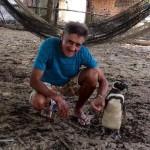 Pingvin, Jing Jing, svake godine pređe hiljade km da bi video čoveka koji mu je spasio život!