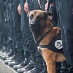 VEST DANA: U terorističkim napadima u Parizu poginuo pas Dizel!
