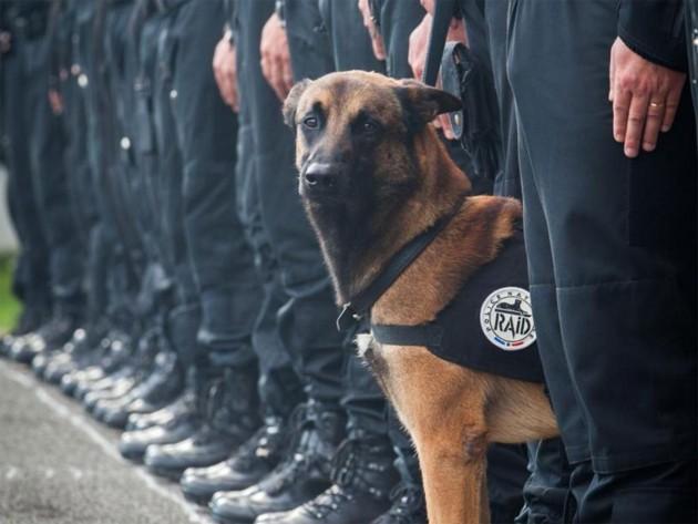 u Parizu poginuo pas petface