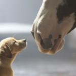 60 MILIONA PREGLEDA: Štene i konj su najbolji prijatelji, koje ništa ne može razdvojiti!