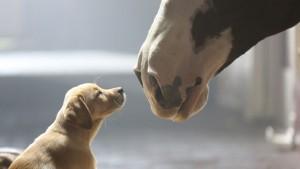 Štene i konj petface
