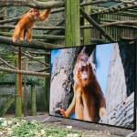"""SJAJNO: U ovom rezervatu postavljeni su televizori kako bi se životinje osećale """"kao kod kuće""""!"""