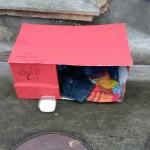 KRUŠEVAC: Staša napravila i postavila kućicu za napuštene – SVAKO MOŽE!