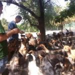 Hranjenje 580 pasa za Sašu Pešića je svakodnevnica i izgleda OVAKO! (VIDEO)
