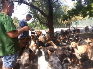 Hranjenje 580 pasa petface