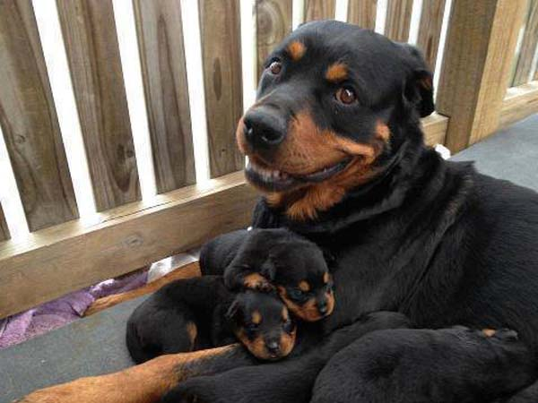 Mame psi petface