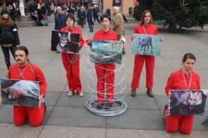 Međunarodni dan prava životinja petface