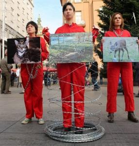 Međunarodni dan prava životinja petface3