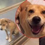 PRE I POSLE: Najtužniji pas na svetu postao je najnasmejaniji kućni ljubimac!