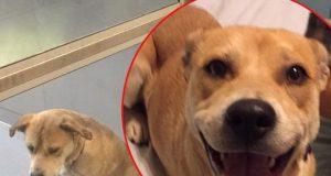 Najtužniji pas na svetu petface
