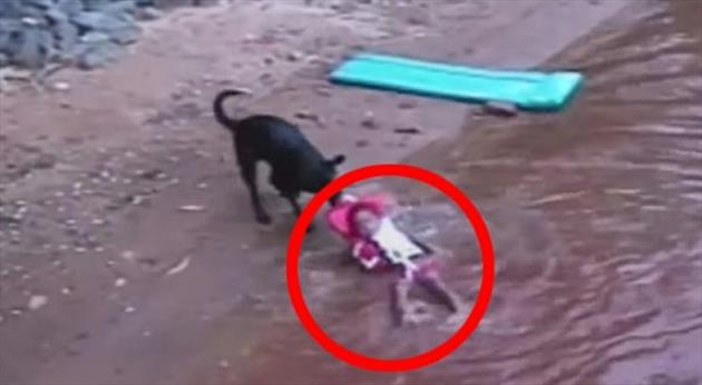 Pas uskočio u vodu petface
