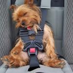 Pet neophodnih aksesoara za putovanje sa psom!