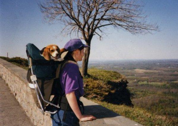 pet neophodnih aksesoara za putovanje sa psom petface