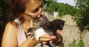Prihvatilište za preko 70 pasa i mačaka petface