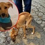 SJAJNO: Radnik gradske čistoće spasio psa, bačenog u kontejner!