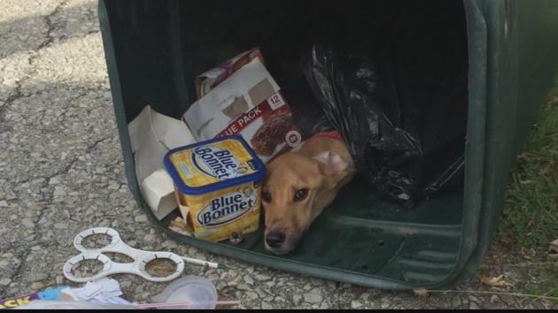 Radnik gradske čistoće spasio psa petface