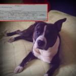BEOGRAD: Taksa za držanje kućnog ljubimca UKINUTA je 2012. godine, a Nadi traže da isplati dug!