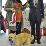 Trainer&Biogance delili su nagrade mešancima petface.20