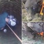 Sećate se čoveka koji je prešao 200 km kako bi spasio psa iz bunara? O njemu piše ceo svet, a pas je UDOMLJEN!